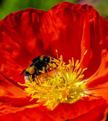 Des apiculteurs récupèrent vos essaims d'abeilles
