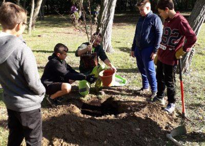 Plantation arbres dans le parc